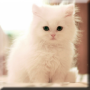 icon Cute Kittens Live Wallpaper