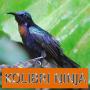 icon Master Kicau Kolibri Ninja