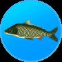 icon True Fishing